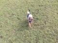 広い芝生でトコトコトコ♪の らっきー